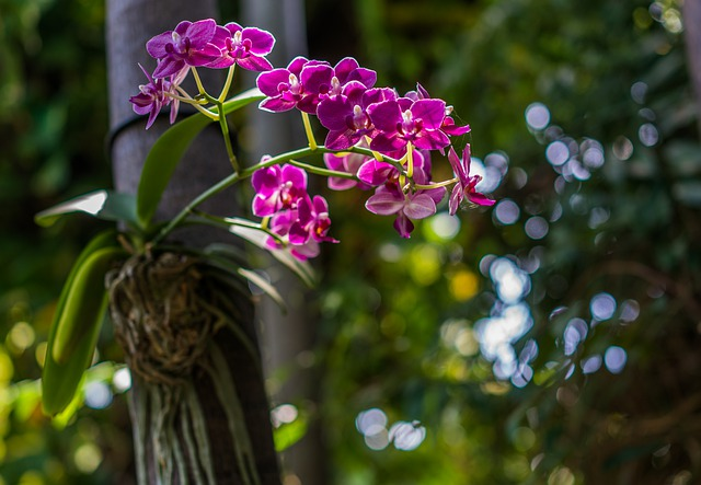 divoká orchidej